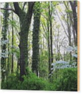 Chesapeake Oldgrowth Forest Wood Print