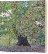 Chestnut Tree In Autumn Wood Print