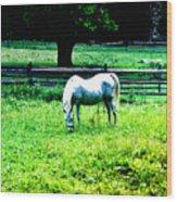 Chestnut Hill Horse Wood Print