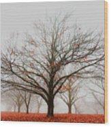 Chestnut Wood Print