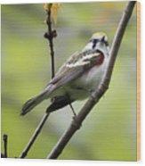 Chestnut Sided Warbler 2 Wood Print