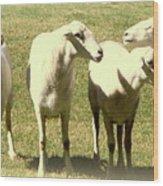 Cheviot Sheep Wood Print