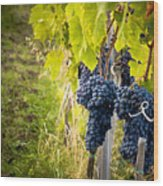 Chianti Grapes Wood Print