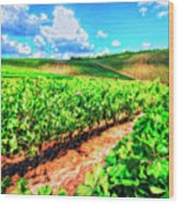 Chianti Vineyard In Tuscany Wood Print