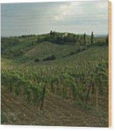 Chianti Vineyards In Tuscany Wood Print
