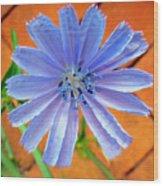 Chic Chic Chicory Wood Print