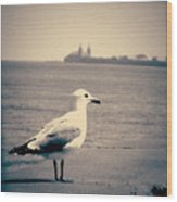 Chicago Seagull Wood Print