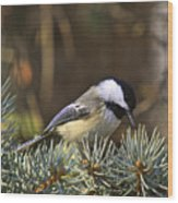 Chickadee-10 Wood Print