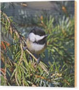Chickadee-12 Wood Print