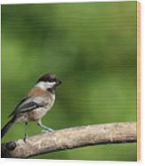 Chickadee . 40d8031 Wood Print