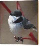 Chickadee 5 Wood Print