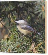 Chickadee-9 Wood Print