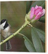 Chickadee By Rhododendron Bud Wood Print