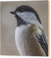 Chickadee Close Up Wood Print