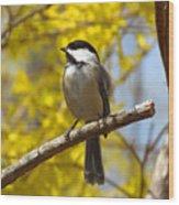 Chickadee In Spring Wood Print