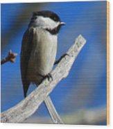 Chickadee Moments Wood Print