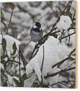 Chickadee On The Jasmine Wood Print