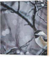 Chickadee Rain Wood Print