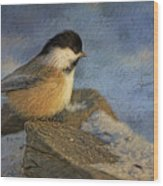 Chickadee Winter Perch Wood Print