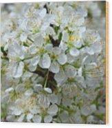 Chickasaw Plum Blooms Wood Print