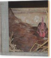 Chicken Box Wood Print