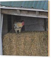 Chicken In Barn Wood Print