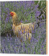 Chicken In The Lavender Wood Print
