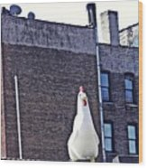 Chicken Little In Manhattan Wood Print