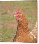 Chicken Strutting Wood Print
