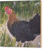 Chicken Study 1 Wood Print