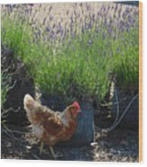 Chicken With Lavender  Wood Print