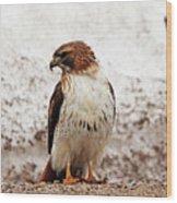 Chickenhawk Wood Print