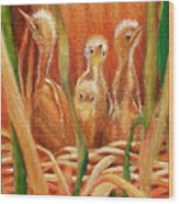 Chicks In The Reeds Wood Print