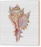 Chicoreus Ramosus Shell Wood Print