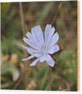 Chicory Blue Wood Print