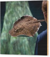 Child Watching Spotted Ray Fish Wood Print