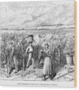 Chile: Wine Harvest, 1889 Wood Print