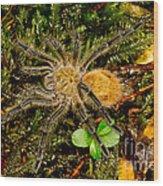 Chilean Tarantula Wood Print