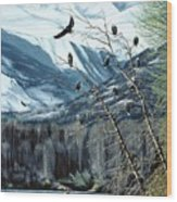 Chilkat River Eagles Wood Print