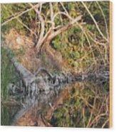 Chilling Iguana Wood Print
