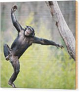 Chimp In Flight Wood Print