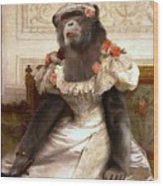 Chimp In Gown  Wood Print