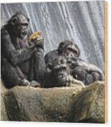 Chimpanzee Snacking On A Sunflower Wood Print