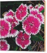 China Pinks 1 Wood Print