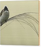 Chinese Bulbul Wood Print