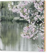 Chinese Cherry Blossoms  Wood Print