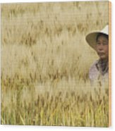 Chinese Rice Farmer Wood Print