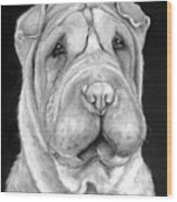 Chinese Sharpei Wood Print