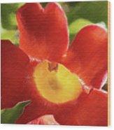 Chinese Trumpet Flower In La Mesa California Wood Print