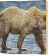 Chinitna Bay Brown Bear Wood Print